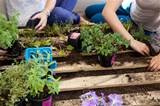 Pallet Gardens Horizontal for Pinterest