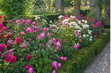 Rose Garden Design on Pinterest | Colorful Roses, Rose Flowers and ...
