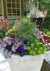 beautiful spring container plantings from terrain and scott arboretum