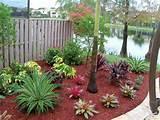beauty small tropical garden ideas jardin pinterest