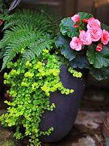 shade gardens ideas creeping jenny gardens decor partial shades