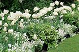White Border Idea for Your Spring Garden