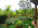 lush low water mediterranean style garden shirley bovshow eden