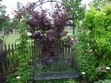 Rose Garden Ideas Pictures | Native Garden Design