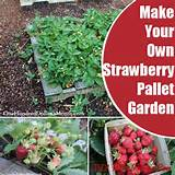 how to make your own strawberry pallet garden diy home things