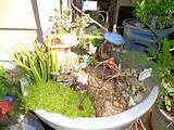 gnome garden ideas foto design gnomes garden planting ideas gnomes