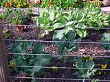edible landscaping edible landscaping made easy with avis licht