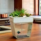 ... !!: Gift, Idea, Fish Tanks, Aquarium, Fishtank, Aqua Farm, Garden